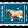 BULGARIA - CIRCA 1980s: A stamp printed in Bulgaria shows cow, circa 1980s — Stock Photo