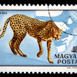 HUNGARY - CIRCA 1981: A stamp printed in Hungary shows cheetah, circa 1981 — Stock Photo