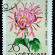 "VIETNAM - CIRCA 1978: A stamp printed in the Vietnam shows flower - ""Chrysanthemum sp."", circa 1978 — Stock Photo #12161379"