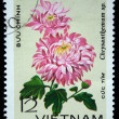 "VIETNAM - CIRCA 1978: A stamp printed in the Vietnam shows flower - ""Chrysanthemum sp."", circa 1978 — Stock Photo"
