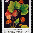 Stock Photo: USSR - CIRC1982: stamp printed in USSR shows Rubus chamaemorus, series circ1982
