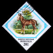 MONGOLIA - CIRCA 1982: A stamp printed in Mongolia shows foal, one stamp from series, circa 1982 - Stock Photo