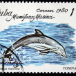 CUBA - CIRCA 1980: A stamp printed in Cuba shows Common Bottlenose Dolphin - Common Bottlenose Dolphin, circa 1980 — Stock Photo