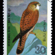 Royalty-Free Stock Photo: VIETNAM - CIRCA 1982: A stamp printed in Vietnam shows Common Kestrel - Falco tinnunculus, series, circa 1982