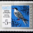 BULGARI- CIRC1970s: stamp printed in Bulgarishows bird Common Tern - Sternhirundo, circ1970s — Stock Photo #12161462