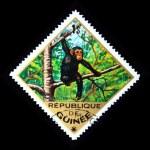 GUINEA - CIRCA 1975: A stamp printed in Guinea shows Common Chimpanzee - Pan troglodytes, circa 1975 — Stock Photo