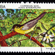 CUBA - CIRCA 1978: A stamp printed in Cuba shows the Bird Common yellow throat - Teretistris fernandinae, stamp is from the series, circa 1978 — Stock Photo #12161465
