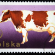 POLAND - CIRCA 1977: A stamp printed in Poland shows cow, circa 1977 — Stock Photo
