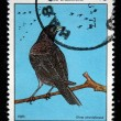 CUB- CIRC1977: stamp printed by Cubshows Bird CubBlackbird - Dives atroviolacea, stamp is from series, circ1977 — Stock Photo #12161543