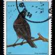 Royalty-Free Stock Photo: CUBA - CIRCA 1977: A stamp printed by Cuba shows the Bird Cuban Blackbird - Dives atroviolacea, stamp is from the series, circa 1977