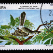 CUBA - CIRCA 1978: A stamp printed in Cuba shows the Bird Cuban Gnatcatcher - Polioptila lembeyei, stamp is from the series, circa 1978 — Stock Photo #12161548