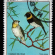 Stock Photo: CUB- CIRC1977: stamp printed in Cubshows Bird CubGrassquit - Tiaris canorus, stamp is from series, circ1977