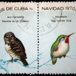 Royalty-Free Stock Photo: CUBA - CIRCA 1970: A stamp printed in Cuba shows the Bird Cuban Pygmy-owl - Glaucidium siju and Cuban Tody - Todus multicolor, stamp is from the series, circa 1970