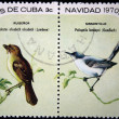 CUBA - CIRCA 1970: A stamp printed in Cuba shows the Bird Cuban Solitaire - Myadestes elisabeth and Cuban Gnatcatcher - Polioptila lembeyei, stamp is from the series, circa 1970 — Stock Photo