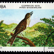 CUBA - CIRCA 1978: A stamp printed in Cuba shows the Bird Cuban Solitaire - Myadestes elisabeth, stamp is from the series, circa 1978 — Stock Photo #12161569
