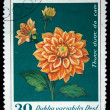 VIETNAM - CIRCA 1982: A stamp printed in Vietnam shows flower Dahlia variabilis, circa 1982 — Stock Photo