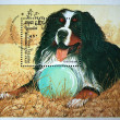 KAMPUCHEA - CIRCA 1990: A stamp printed in Kampuchea (Kingdom of Cambodia) shows Dog Bernese, circa 1990 — Stock Photo