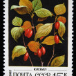 USSR - CIRCA 1982: A stamp printed in the USSR shows dogwoods, known as dogberries or houndberries - Cornus , circa 1982 - Stock Photo