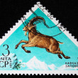 USSR - CIRCA 1973: A stamp printed in the USSR shows East Caucasian Tur - Capra cylindricornis, circa 1973 — Stock Photo