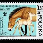 POLAND - CIRCA 1978: A stamp printed in Poland shows Przewalski Horse, circa 1978 — Stock Photo