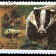 USSR - CIRCA 1975: A stamp printed in the USSR shows European Badger, one stamp from series, circa 1975 - Stock Photo