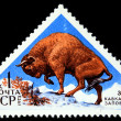 USSR - CIRCA 1973: A stamp printed in the USSR shows European bison - Bison bonasus, circa 1973 - Stock Photo