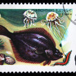 POLAND - CIRCA 1979: A stamp printed in Poland shows fish European Flounder - Platichthys flesus, circa 1979 — Stock Photo