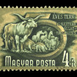 HUNGARY - CIRCA 1950s: A stamp printed in Hungary shows farm animals - cows, pigs, sheep, and horses, series 5 year plan, circa 1950s — Stock Photo