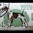 Royalty-Free Stock Photo: USSR - CIRCA 1965: A stamp printed in USSR shows dogs with the inscription \
