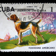 Stock Photo: CUB- CIRC1976: stamp printed in Cubshow dog foxhound americano, circ1976