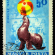 HUNGARY - CIRCA 1985: A stamp printed in Hungary shows fur seal in cicus, circa 1985 — 图库照片