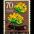 YUGOSLAVIA - CIRCA 1956: A stamp printed in Yugoslavia shows Gentiana lutea - Great Yellow Gentian, circa 1956 — Stock Photo