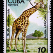Stock Photo: CUB- CIRC1978: stamp printed by Cubshows giraffe - Giraffcamelopardalis, stamp is from series, circ1978