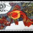 CZECHOSLOVAKIA - CIRCA 1975: A stamp printed in Czechoslovakia shows gold fishes, circa 1975 — Stock Photo