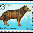 BULGARIA - CIRCA 1977: A stamp printed in Bulgaria shows Golden Jackal - Canis aureus, circa 1977 - Stock Photo