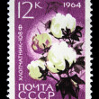 USSR - CIRCA 1964: A stamp printed in USSR (Russia) shows a agricultural crop with the inscription &amp;quot;Cotton (Gossypium)&amp;quot; from the series &amp;quot;Agricultural crops bred by Soviet scientists&amp;quo - Stock Photo