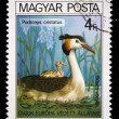 HUNGARY - CIRCA 1980: A Stamp printed in Hungary shows bird Great Crested Grebe - Podiceps cristatus, circa 1980 — Stock Photo