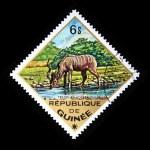 GUINEA - CIRCA 1975: A stamp printed in Guinea shows Greater Kudu - Tragelaphus strepsiceros, circa 1975 — Stock Photo