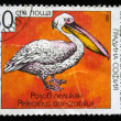 BULGARIA - CIRCA 1988: A stamp printed in Bulgaria shows Great White Pelican - Pelecanus onocrotalus, circa 1988 — Stock Photo