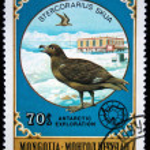MONGOLIA - CIRCA 1980: A stamp printed in Mongolia shows Great Skua - Stercorarius skua, series Antarctic exploration, circa 1980 — Stock Photo #12165266