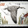 POLAND - CIRCA 1981: A stamp printed in Poland shows Greylag Goose - Anser anser, circa 1981 - Stock Photo