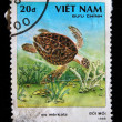 Stock Photo: VIETNAM - CIRC1988: stamp printed in Vietnam shows Hawksbill turtle - Eretmochelys imbricata, circ1988