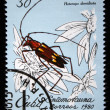 "CUBA - CIRCA 1980: A Stamp printed in Cuba shows an image of an Insect with the inscription ""Heterops dimidiata"", from the series ""Insects"" , circa 1980 - Stock Photo"