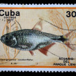 CUBA - CIRCA 1977: A postage stamp printed in the Cuba shows image a sea life — Stock Photo #12165345