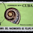 CUBA - CIRCA 1974: A stamp printed in Cuba shows mollusk Hemitrochus fuscolabiata (Poey), circa 1974 - Stock Photo