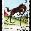 CUBA - CIRCA 1981: A stamp printed in CUBA shows a horse from series: Wild Horses, circa 1981 — Stock Photo #12165398