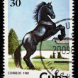 CUBA - CIRCA 1981: A stamp printed in CUBA shows a horse from series: Wild Horses, circa 1981 — Stock Photo #12165399