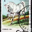 CUBA - CIRCA 1981: A stamp printed in CUBA shows a horse from series: Wild Horses, circa 1981 — Stock Photo #12165402