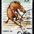CUBA - CIRCA 1981: A stamp printed in CUBA shows a horse from series: Wild Horses, circa 1981 — Stock Photo #12165403
