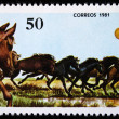 CUB- CIRC1981: stamp printed by Cubshows horses, stamp is from series , circ1981 — Stock Photo #12165406